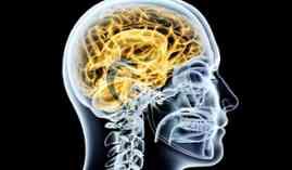 Curso Gratuito Técnico en Neurología (Curso Homologado con Titulación Universitaria + 20 Créditos tradicionales LRU)
